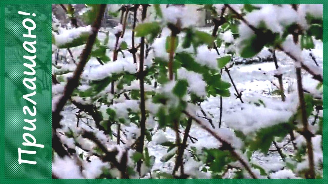 У природы нет плохой погоды.)) Снег в мае в Подмосковье ...