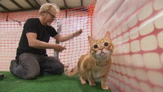 Ask Adam Savage: How Ridiculous Was Filming the MythBusters Herding Cats Episode?