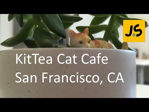 Kittea Cat Cafe