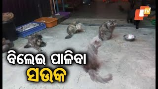 Animal lover Bangalore's Mujibur Rahman owns more than 15 cats