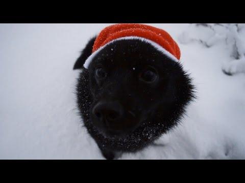 Jekku Schipperke's Christmas   Jekku-schipperken joulu