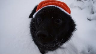 Jekku Schipperke's Christmas   Jekkuschipperken joulu
