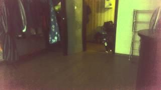 Кошка в роли собаки