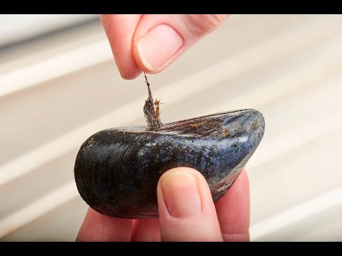 How to Clean and Prepare Mussels  Bord Bia