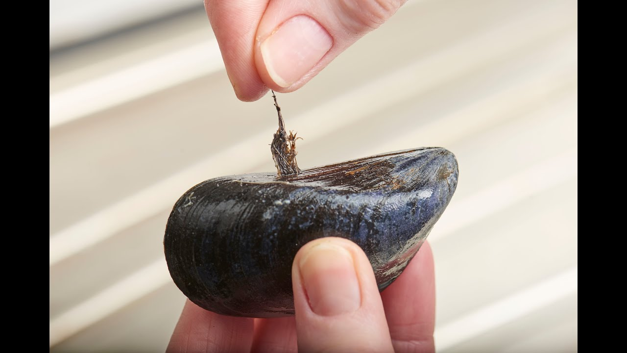 How to clean mussels 74