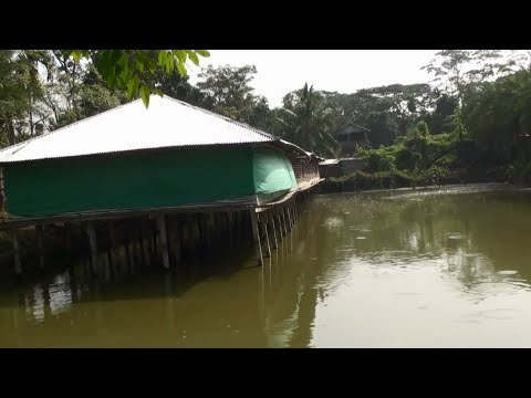 Integrated Farming Investment - Integrated Fish And Layer Chicken Farm Business Ideas