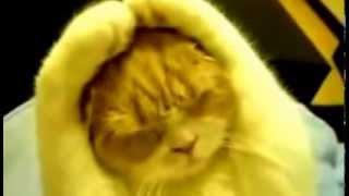 Кот уши прикрыл  Ничего ни вижу ни чего не слышу!!!