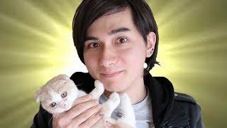 新しい猫の名前決まりました!!! Our New Cat's Name :D thumbnail