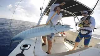 Wahoo Fishing--Virgin Islands (IKATI)