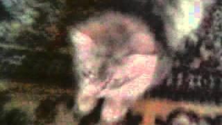 """Кошка которая боится """" КРЫС!!!!"""""""