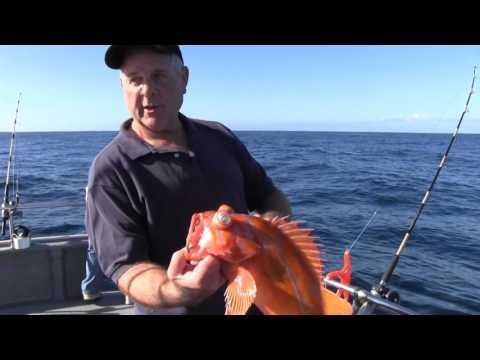 Rockfish Identification