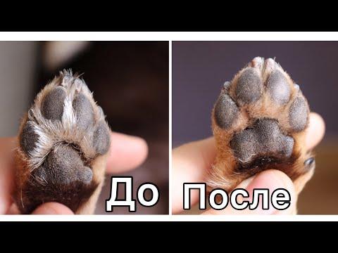 Как я подстригаю когти собаке. Как стричь когти Чихуахуа. Можно ли подпиливать когти собаке