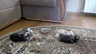 Видео котята 1.avi