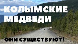 Медвежата на пути. Ольчанский перевал. Усть-Нера 2020 | Беларусь - Магадан на велосипеде | Якутия