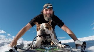 One of Bradley Friesen's most viewed videos: Bentley the Bulldog's Helicopter Adventure | Shot in 4k