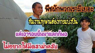 #คนไทยในอิสราเอล ช่วงนี้ผักไทยเยอะทีมงานต้องการแจกจ่ายให้พี่น้องคนไทยได้กิน ไม่ได้หวังสิ่งของตอบแทน