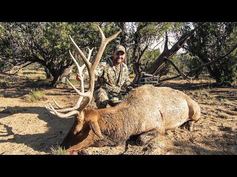 New Mexico Bowhunting Elk 2020 I Team Radical