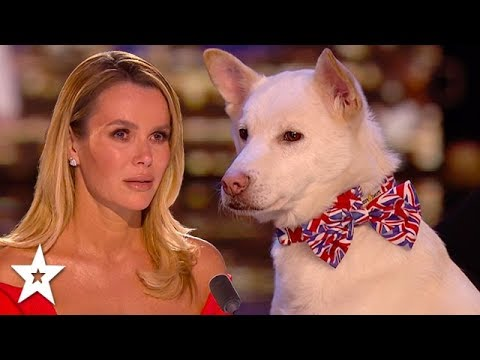 Refuge Dog Has Judges in Tears!! | Britain's Got Talent 2020 | Got Talent Global