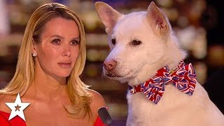 Refuge Dog Has Judges in Tears!! | Britain's Got Talent 2020 | Got Talent Global