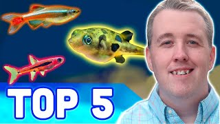 TOP 5 NANO AQUARIUM FISH