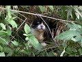 【地域猫・野生動物】猫とたっぷり触れ合う日曜日。~No BGM  version~【魚くれくれ野良猫】