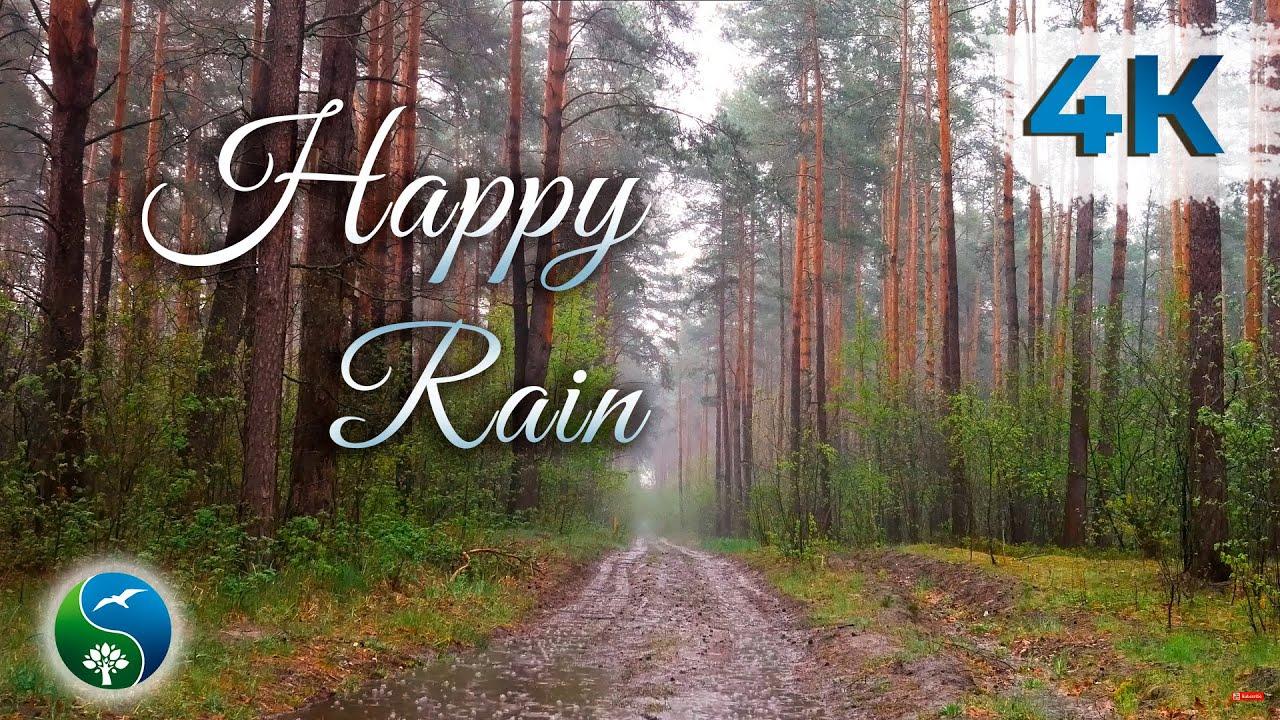 Сильный дождь в лесу весной | Шум дождя и грозы | Для сна, медитации или учёбы | Дождь |  ☔