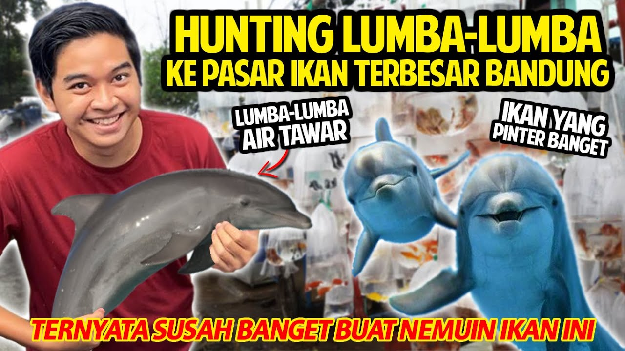 HUNTING LUMBA-LUMBA KE PASAR TERBESAR DI BANDUNG! SUSAH BANGET DIDAPET! BABY DOLPHIN FISH AIR TAWAR!