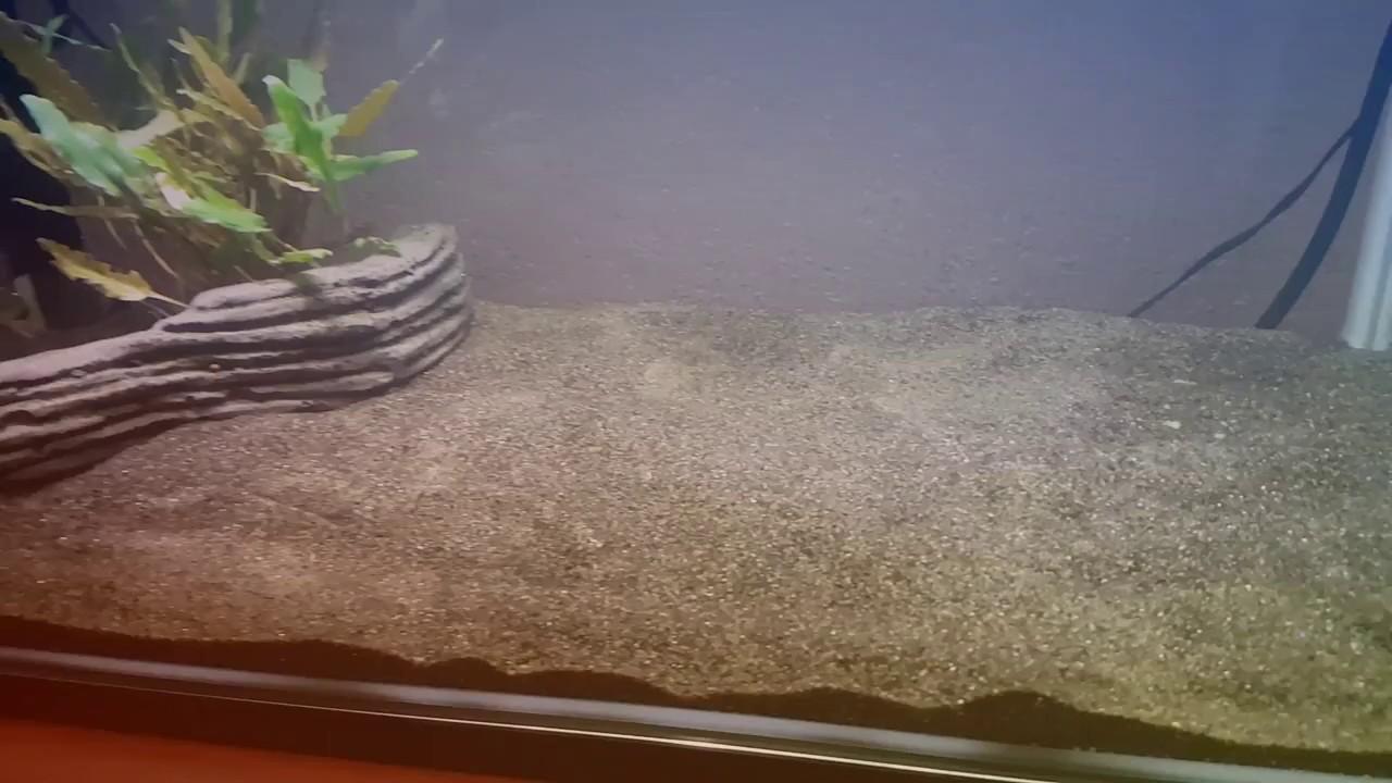 Superfish aquarium fish tank aqua 60 - My New Superfish Home 60