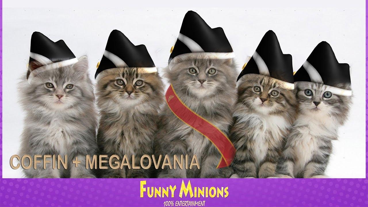 CATS COFFIN + MEGALOVANIA COVER