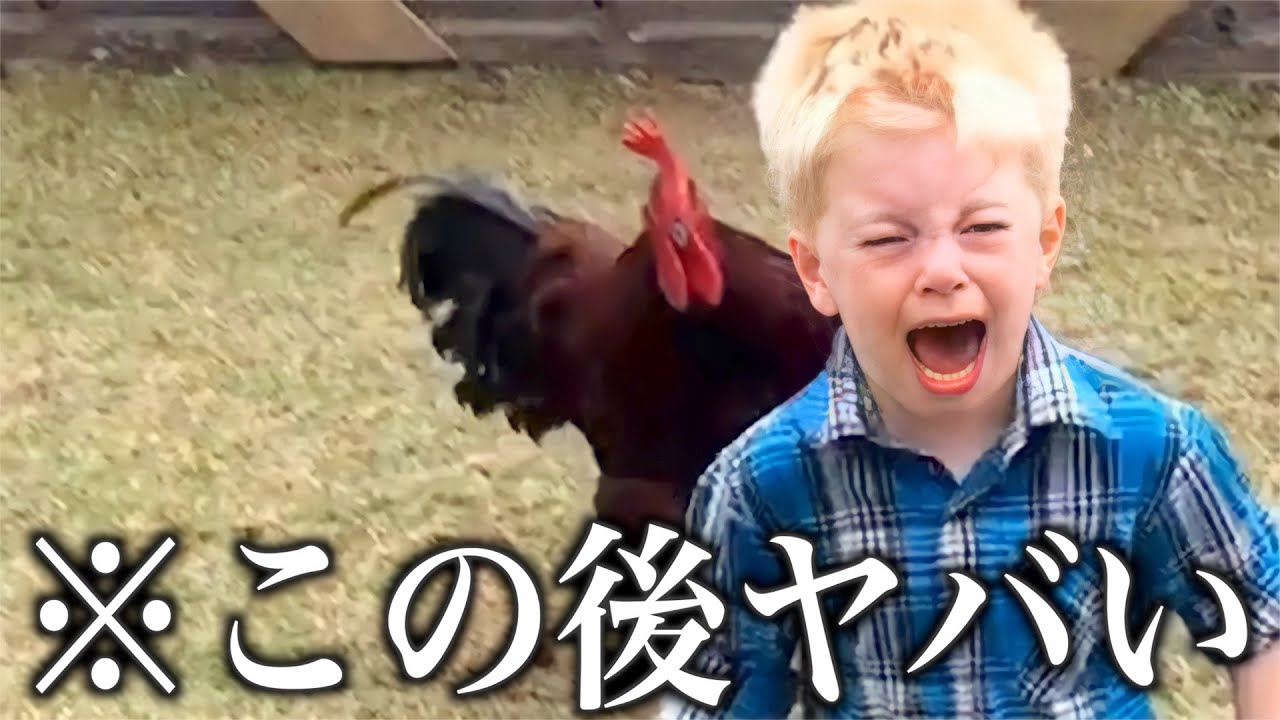 【神回】ツッコミどころ満載な動物おもしろ動画見ようぜwwwwww⑤【ハプニング映像】【犬】【猫】