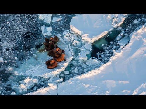 Arctic Sea Ice: Setting the Record Straight
