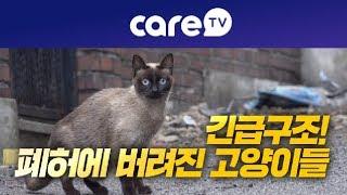 [케어TV]긴급구조 폐허에 버려진 고양이들