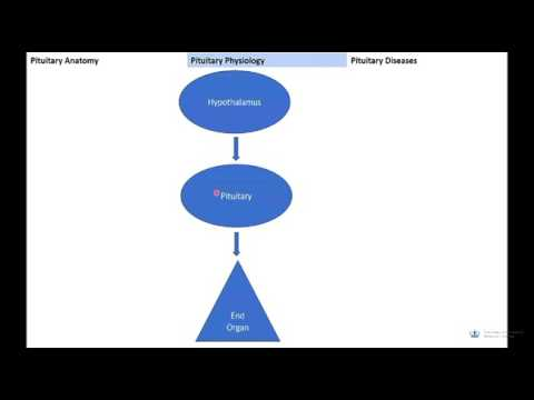 Endocrinology Lectures- BHD1- 2017