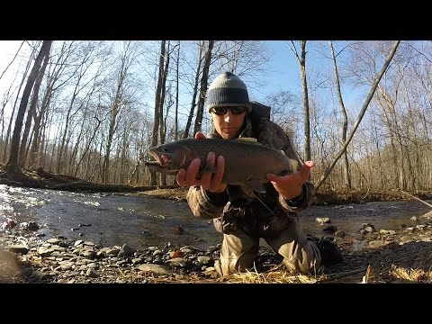 Lake Ontario Tributary Fly Fishing. Rainbow Trout, Steelhead