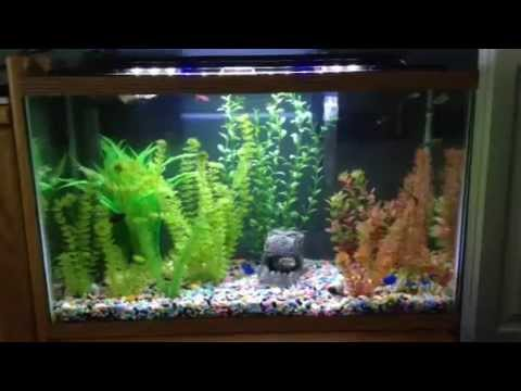 29 gallon betta sorority fish tank youtube for 29 gallon fish tank