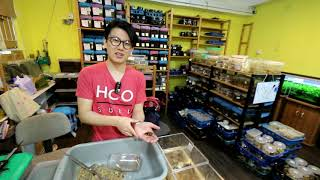 Discovery Beetles Hongkong - Jimineys factory