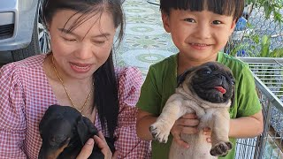 Tin và anh Hai đi mua Cún Con ❤ Chó Pug mặt xệ & Lạp Xưởng