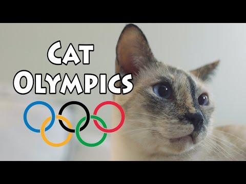 N2 the Talking Cat S4 Ep22 - Cat Olympics