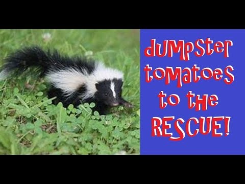 how to get rid of skunk smell on dogs Archives - Save Your