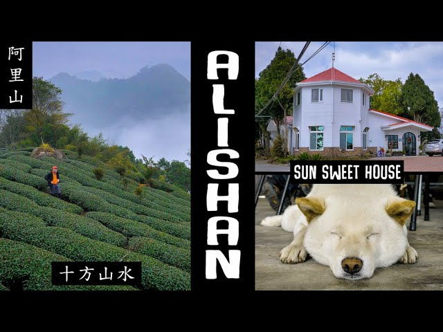 ALISHAN SunSweetHouse (阿里山十方山水民宿)