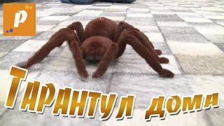 Павук тарантул у нас вдома, розпакування іграшки на пульті управління Unboxing review spider tarantul