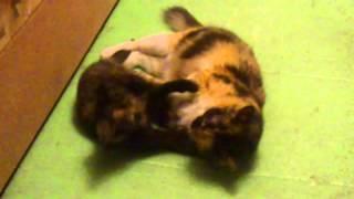 Кошка убивает своего котенка