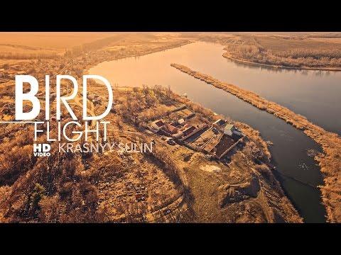 Полет птицы. Красный Сулин. BIRD FLIGHT Krasnyy Sulin
