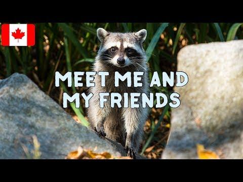 Animals Of Canada - Look at Canada's Amazing Wildlife!