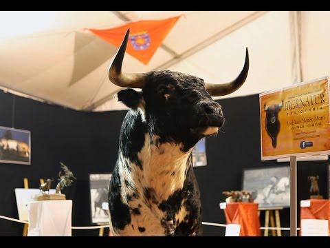 II Feria Internacional del Toro. Coria 2015. Foto Moisés