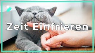Effekt TIME-FREEZE: Zeit Einfrieren/Anhalten | Filmora9 Showcase