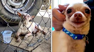 15 Most Touching Animal Rescues