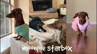 Chapter 7:  Moonpie Starbox Tik Tok Compilation