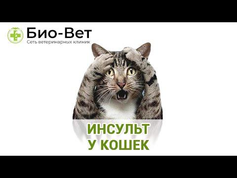 ИНСУЛЬТ У КОШЕК // Сеть Ветклиник БИО-ВЕТ