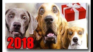 СОБАЧИЙ ГОД. С Новым 2018-м годом!